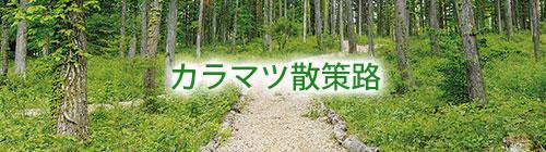 カラマツ散策路.jpg