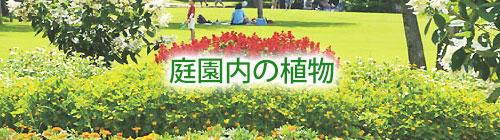 庭園内の植物.jpg