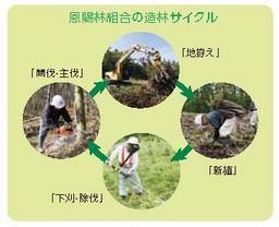 造林サイクル.jpg