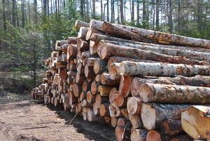 組合管理地から搬出した間伐材