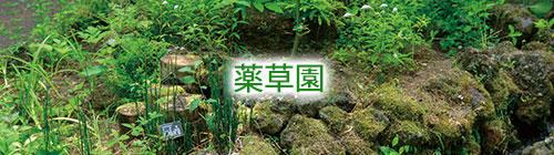 薬草園.jpg
