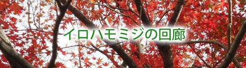 イロハモミジの回廊.jpg